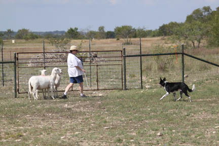 Shiner magnanimously offers to help with the herding