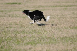 Shiner gets up to speed
